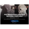 PGG Wrightson Livestock National Video Sale